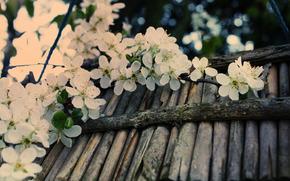 bloom, cherry, branch, White, tree, Sticks, cortex, macro, spring, reflections, blurring