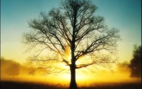 свет, дерево, солнце