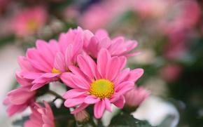 Flowers, paradise, vegetation