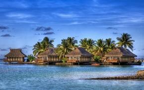 palimy, beach, tropics