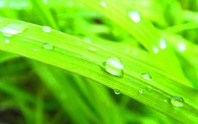 drop, grass