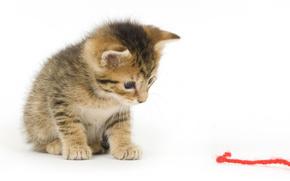 kitten, thread