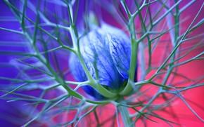 fleur, pointes, bleu