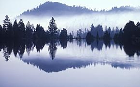 alberi, acqua, riflessione