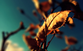 Liste, Herbst, Makro, Himmel