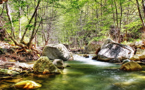 river, stones, forest