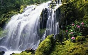 wodospad, zielenina, kwiaty, Rocks