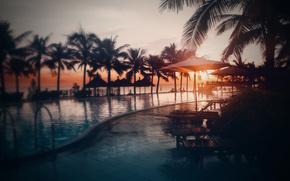 beach, Palms, sunset, pool