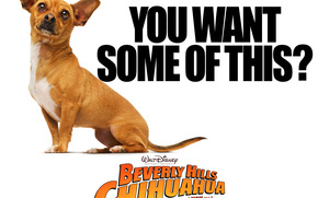 Beverly Hills, Beverly Hills Chihuahua, film, film