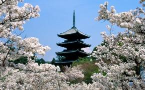 япония,  пагода,  храм,  весна,  сакура,  вишня
