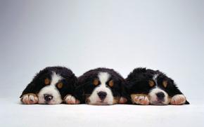 щенки, собаки, малыши