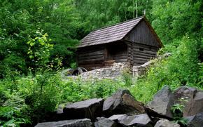 foresta, verdura, alberi, piccola capanna, pietre