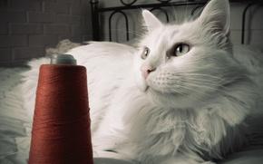 кот,  белый,  нитки,  винтаж