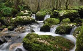 forest, greens, water, creek, stones