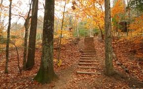 foresta, autunno, sentiero, scala