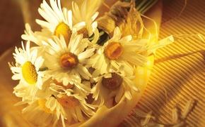 букет,  ромашки,  цветы,  лето,  ткань,  лыко