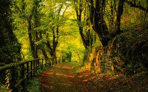 道路, 秋天, 森林