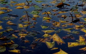 autunno, fogliame, acqua, lago, superficie liscia, annegato