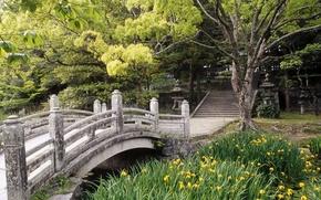 Giappone, ponte, fiori, estate