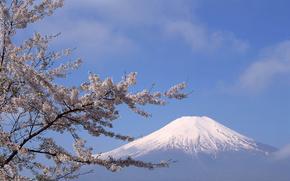 Fuji, Japo, montanha, sakura