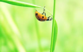 list, Sprout, ladybird, macro