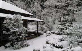 Giappone, casa, giardino, inverno