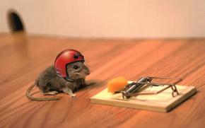 mouse, trappola per i topi, formaggio