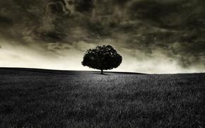 черное,  дерево,  поле,  облака,  мрак