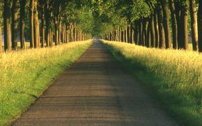 дорога, аллея, путь, дороги, аллеи, пути, природа, пейзажи, дерево, деревья, красивые обои для рабочего стола, даль