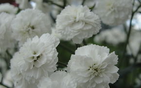 Flores, Branco, terry,