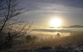 paesaggio, inverno, neve, albero, ramo, sole, nebbia