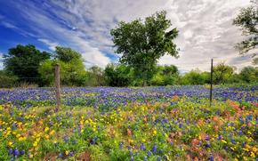 性质, 春天, 天空, 花卉