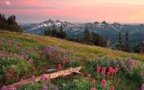 Montagnes, coucher du soleil, prairie, Fleurs