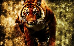 tigre, animale, Photoshop