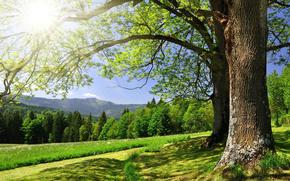 estate, alberi, verdura, sole, cielo, foresta