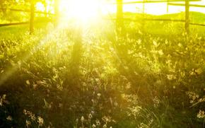 printemps, images de printemps pour le bureau, printemps fond d'cran, belle photo, Nature, herbe, cltures, matin, soleil, lumire, rayons, t, fond d'cran d't