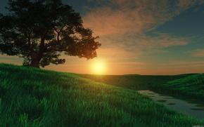 solitaire, arbre, cte, petite rivire, soleil