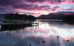 evening, lake, gangway, Duck, swim