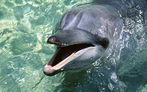 delfino, acqua, carta da parati