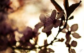 цветок,  макро,  ветка