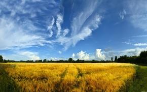поле,  след,  небо,  голубое,  лес