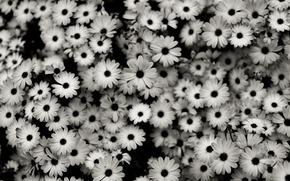 kwiaty, makrofotografia, kwiaty, kwiat, natura, pikne zdjcia