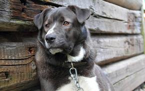 Hund, Freund, sehen, Depression, Loyalitt