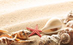 ракушки, лето, берег, песок, солнце