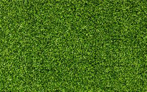herbe, fond d'cran, photo en gros plan, fonds d'cran pour le bureau, lgumes verts, t, fracheur