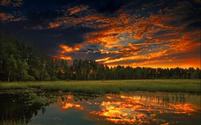 sunset, forest, evening, nature, summer