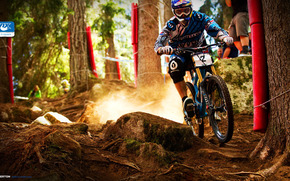 bicycle, downhill, Extreme, forest