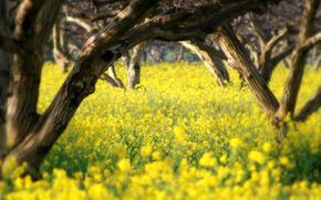 Nature, printemps, t, images de printemps pour le bureau, fond d'cran d't, arbre, Fleurs, beaut, tendresse