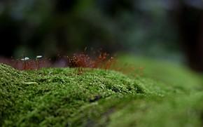grass, moss, greens