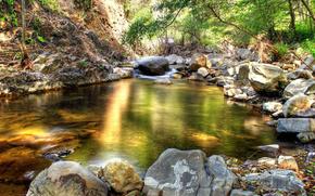 лес,  ручей,  деревья,  камни,  вода